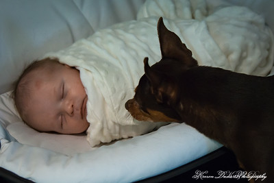 Newborn & Family Lifestyle