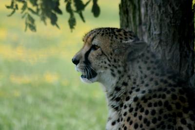 General Park Experience - Mixed Animals, Scenics
