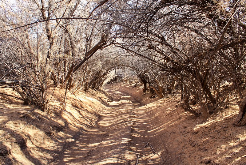 Natural tunnel by the Gila River at Cochran (2018)