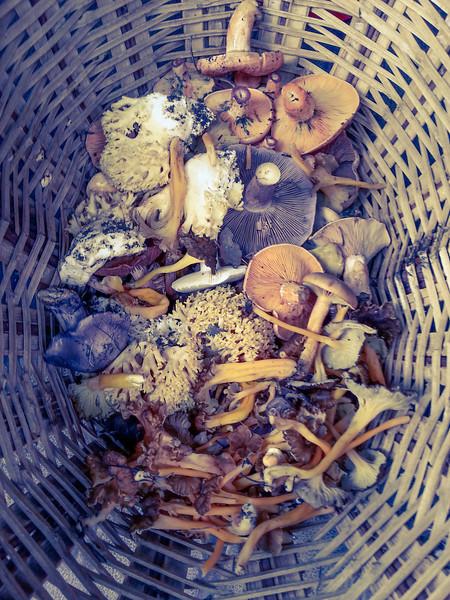 mushrooms in basket 2.jpg