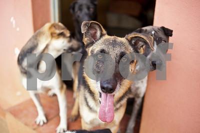 ADANA - Give a dog a home