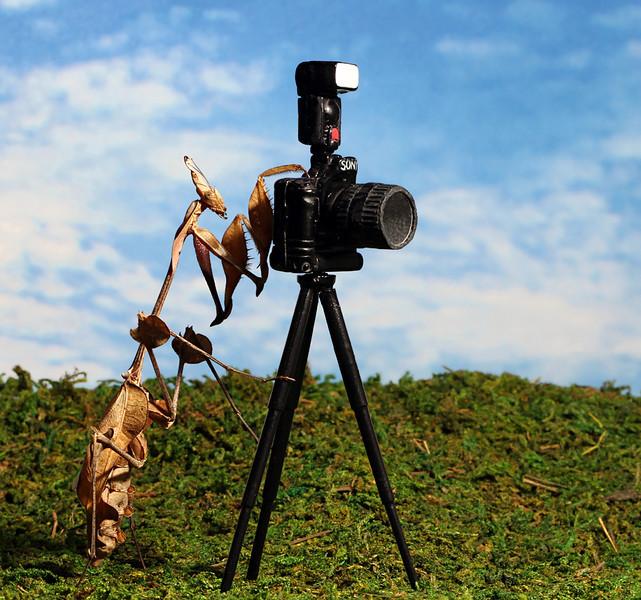 Mantis Photographer.jpg