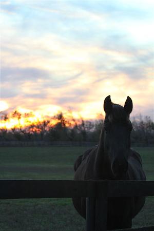 2011 Alltech National Horse Show