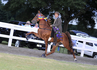 FOOTHILLS JUBILEE WALKING HORSE SHOW-AUG 3   -DALLAS NC