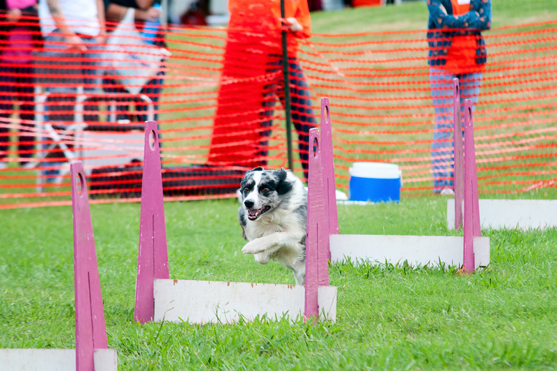 2011 Bark in the Park-173.jpg
