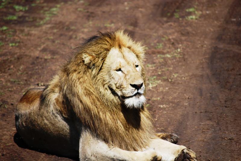 Ngorongoro (121).JPG