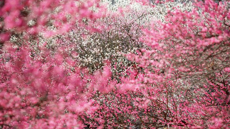Flowers2 1920x1080 (16).jpg