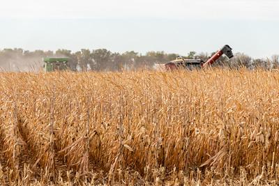 2020 Corn Harvest - Huron, SD
