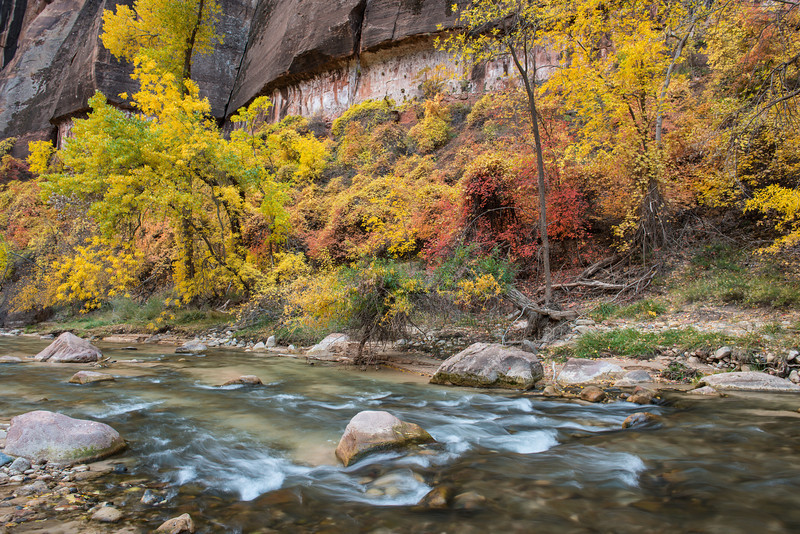 When we arrived at Zion we went on down to the Temple of Sinawava and photographed some of the fall color along the mile long river walk