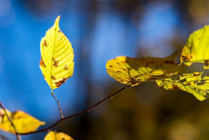 foliage-2014-84.jpg