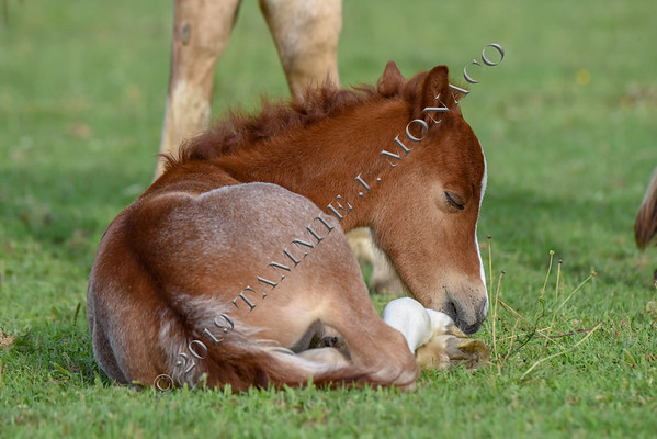 Loafers Lodge Foals 061119