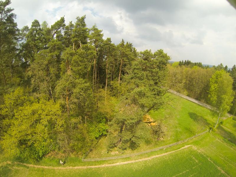 Der blaue Fleck in der kahlen Stelle der Kiefer rechts von Bildmitte ist Sofie. Leider nicht zu erkennen, ist sie noch am Baum an den Monkey-Griffen. Baumklettern Sofie vom Start bis zur Landung
