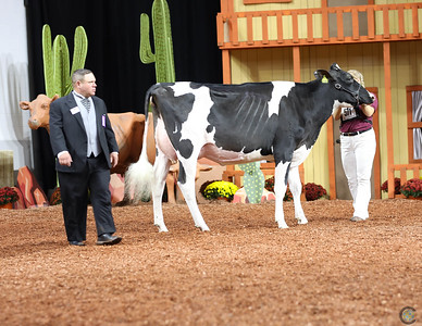 WDE Jr Holstein Cows 2018