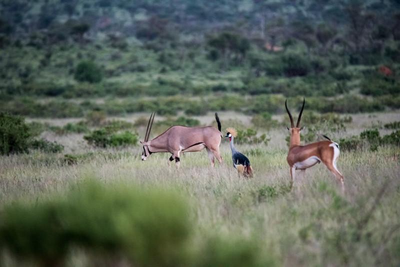 Samburu (26 of 70).jpg