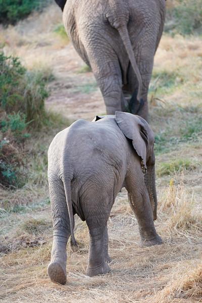 safari-2018-22.jpg