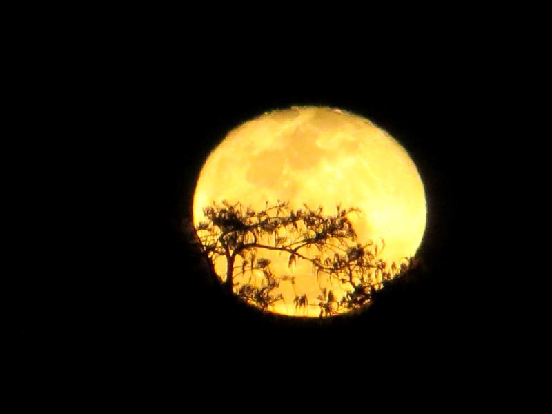 aIMG_1358 1395 full moon over alligator pond & boardwalk, Anahinga Trail EvG.jpg