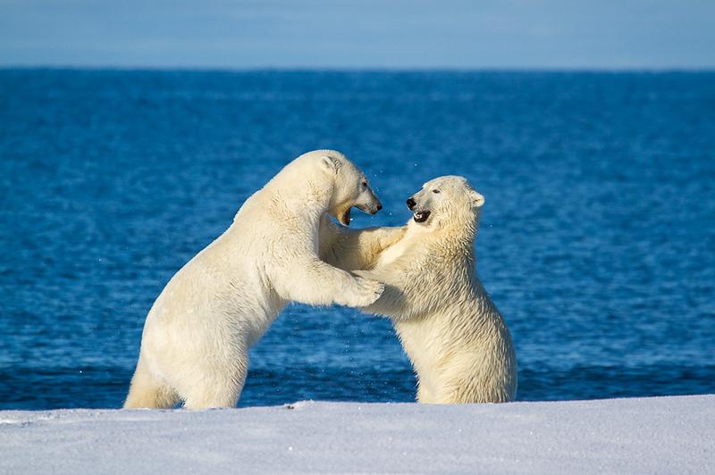 Alaska Polar Bear Photo Workshop-3.jpg