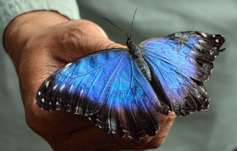 Butterflies 04-17-2011 DF.JPG