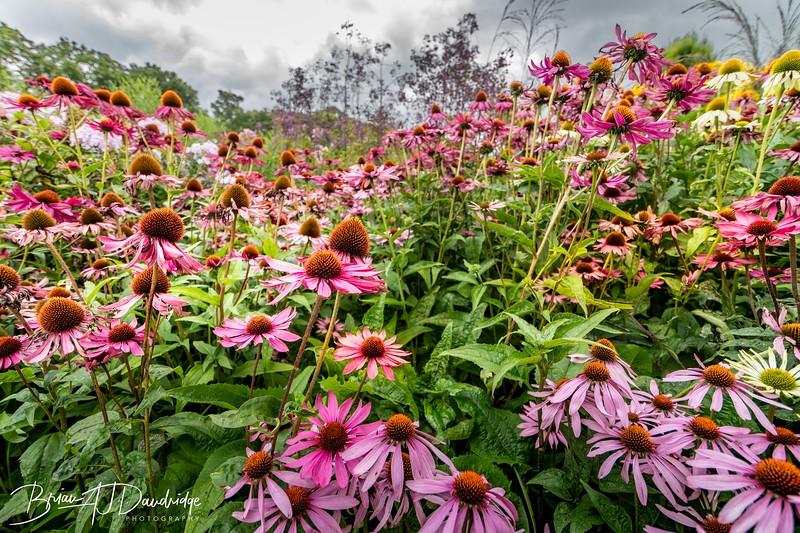 500_Sussex Prairie Gardens-3741.jpg
