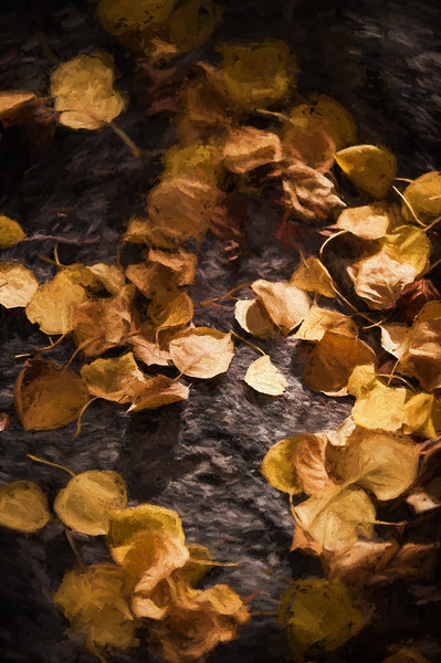Aspen Leaves In Autumn 065 | Wall Art Resource