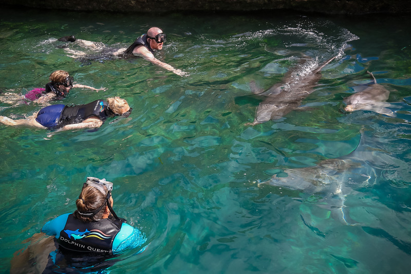 2019 August Dolphin Quest-116.jpg