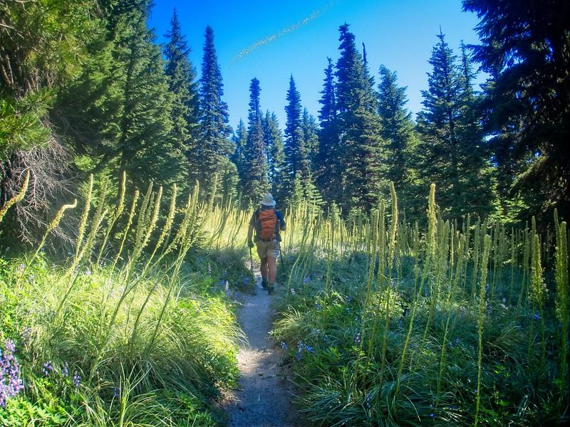 PCT Barlow Pass to Timberline © Chiyoko Meacham