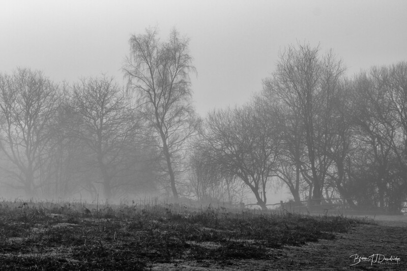 Misty Morning on Ditchling Common