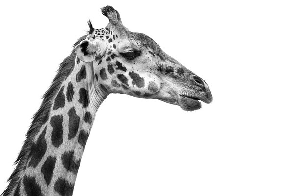 2015.08 Tanzania