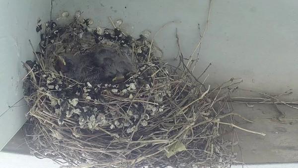 2014-06-11 Baby Birds