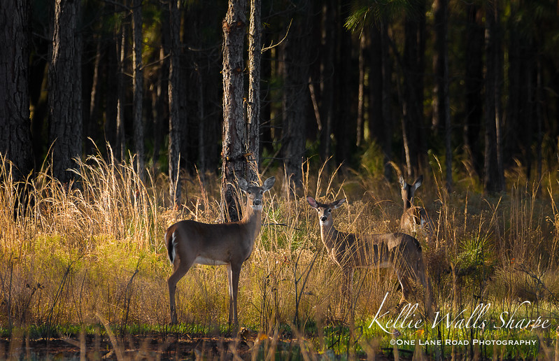 Clay Island - North Shore of Lake Apopka, Florida 2017