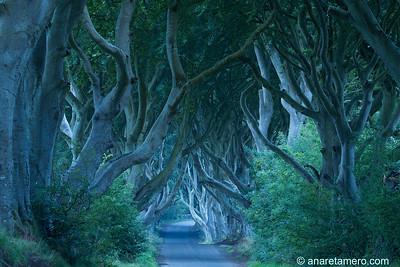Ireland/ Irlanda