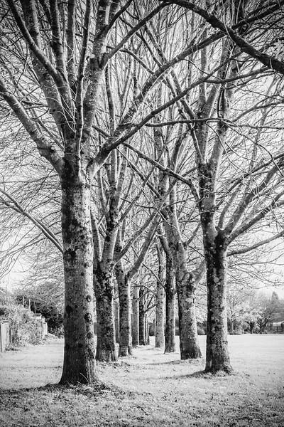 Lliswerry Pond & Park -32B&W.jpg