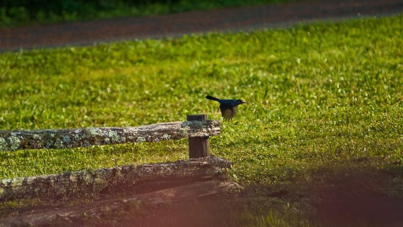Backyard Images