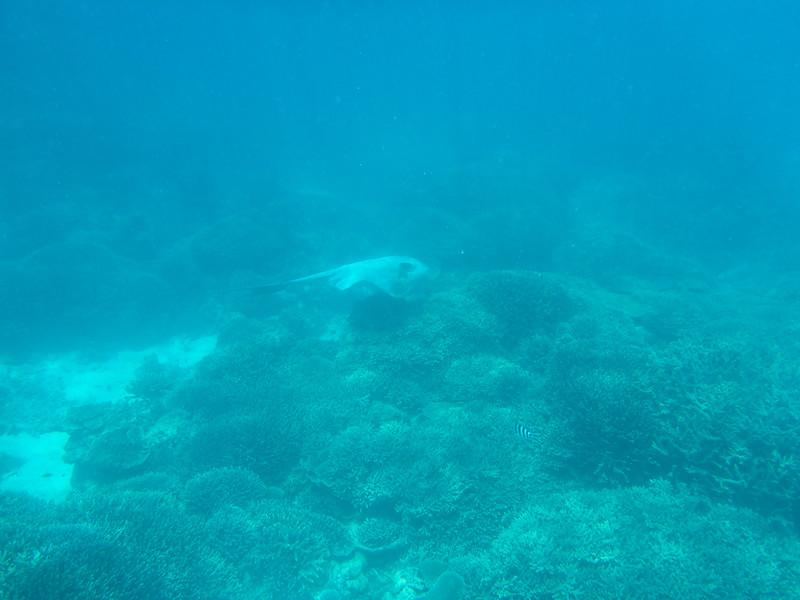 09. Lady Elliott Island-1467.jpg