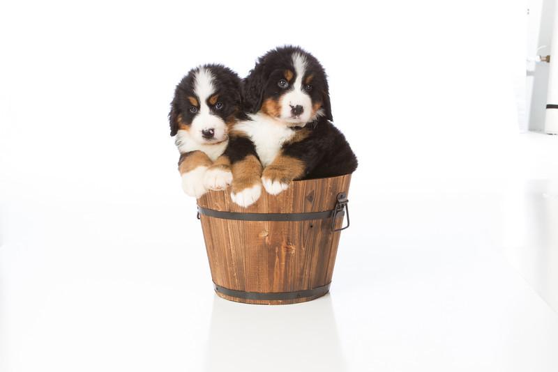 2013-Pearson Pups-Jun02-0414.jpg