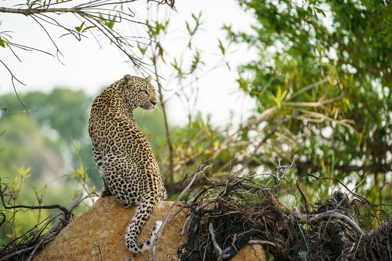 LeopardHills-20171024-1872.jpg