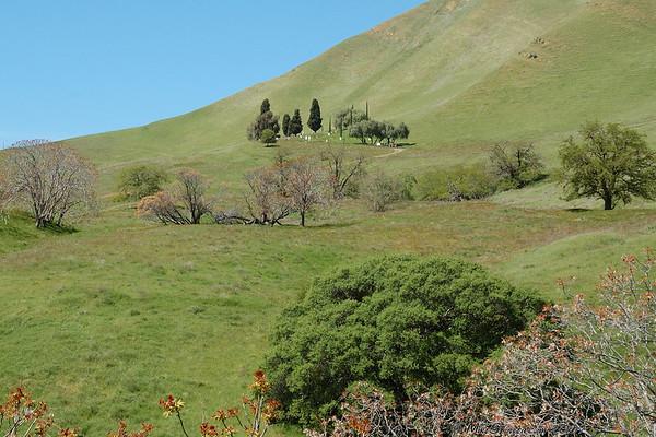 Black Diamond Mines Regional Preserve, CA