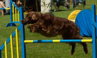 Agility Canis Mei 2010