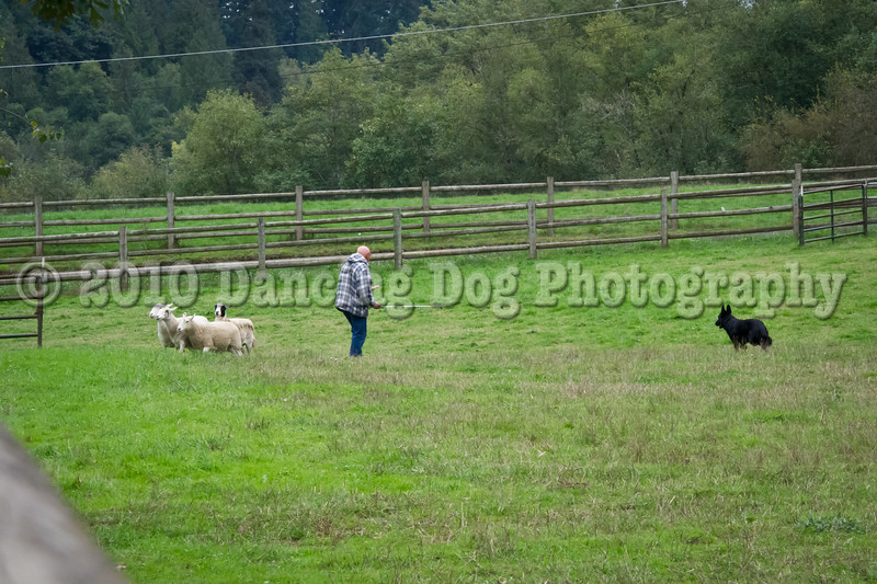 PacNW_HT_Sun_Sheep-6738