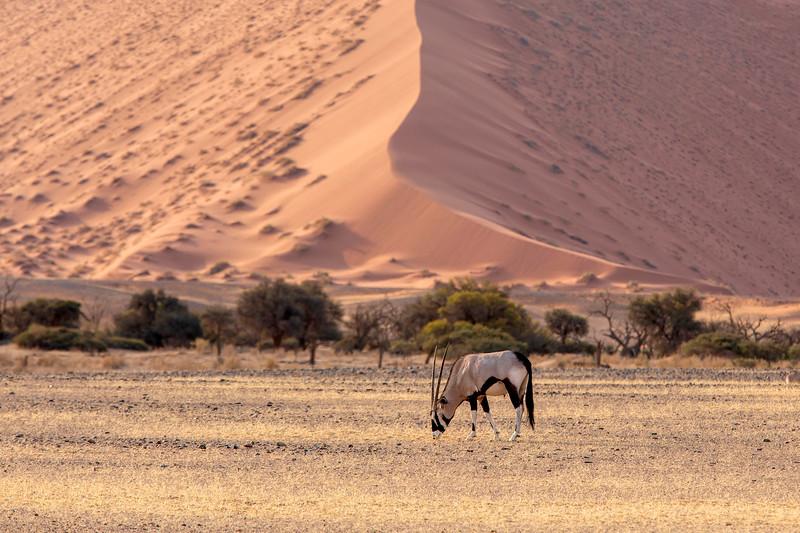 Namibia 69A4024.jpg
