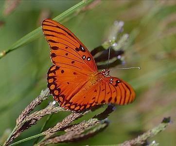 Armond Bayou Butterflies