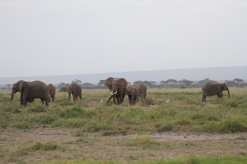 Kenya 2019 #2 406.JPG