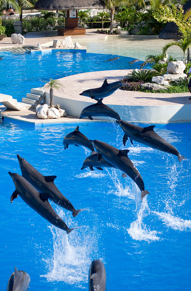 Dolphinaris Cancun 11.jpg