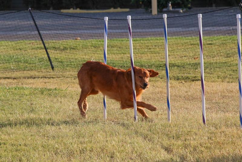 11-4-2018 Border Terrier-2677.jpg
