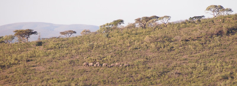 P5046248-marching-elephants.JPG