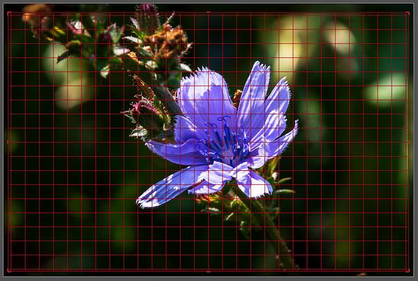 Screenshot of the Crop & Straighten Tool's Crop Overlay set to Grid  Customizing the Grid Overlay