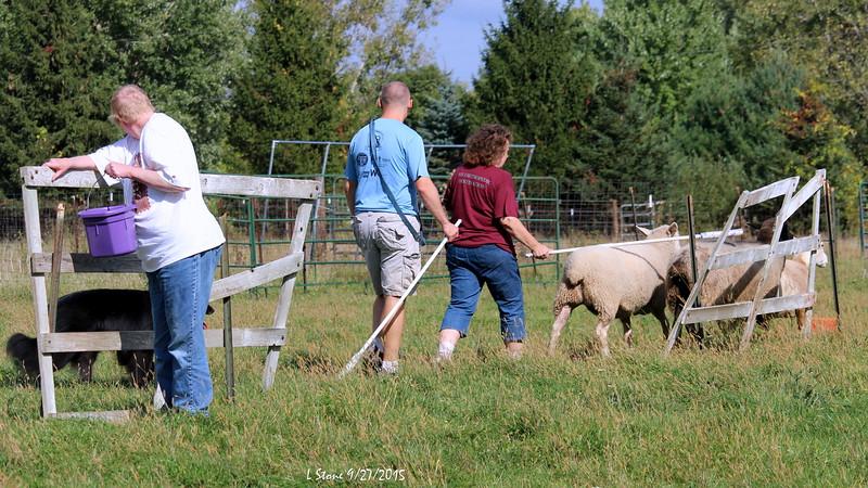 2015.9.27 Herding at Bonnies (51).JPG