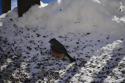 Birds - 2018
