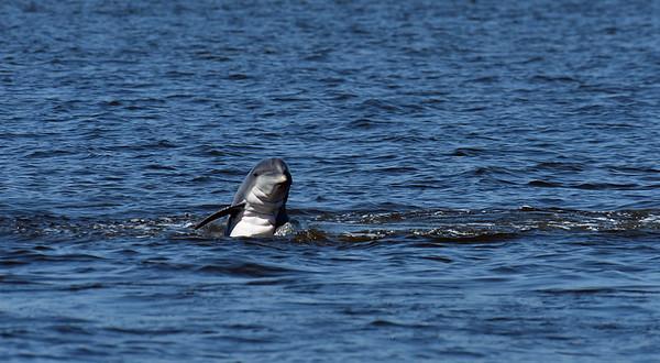 Jekyll Island Boat Tours - Dolphin 07-10-20