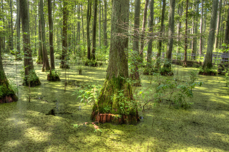 Southern Illinois Cypress SwampDSC_8217_8_9_tonemapped.jpg